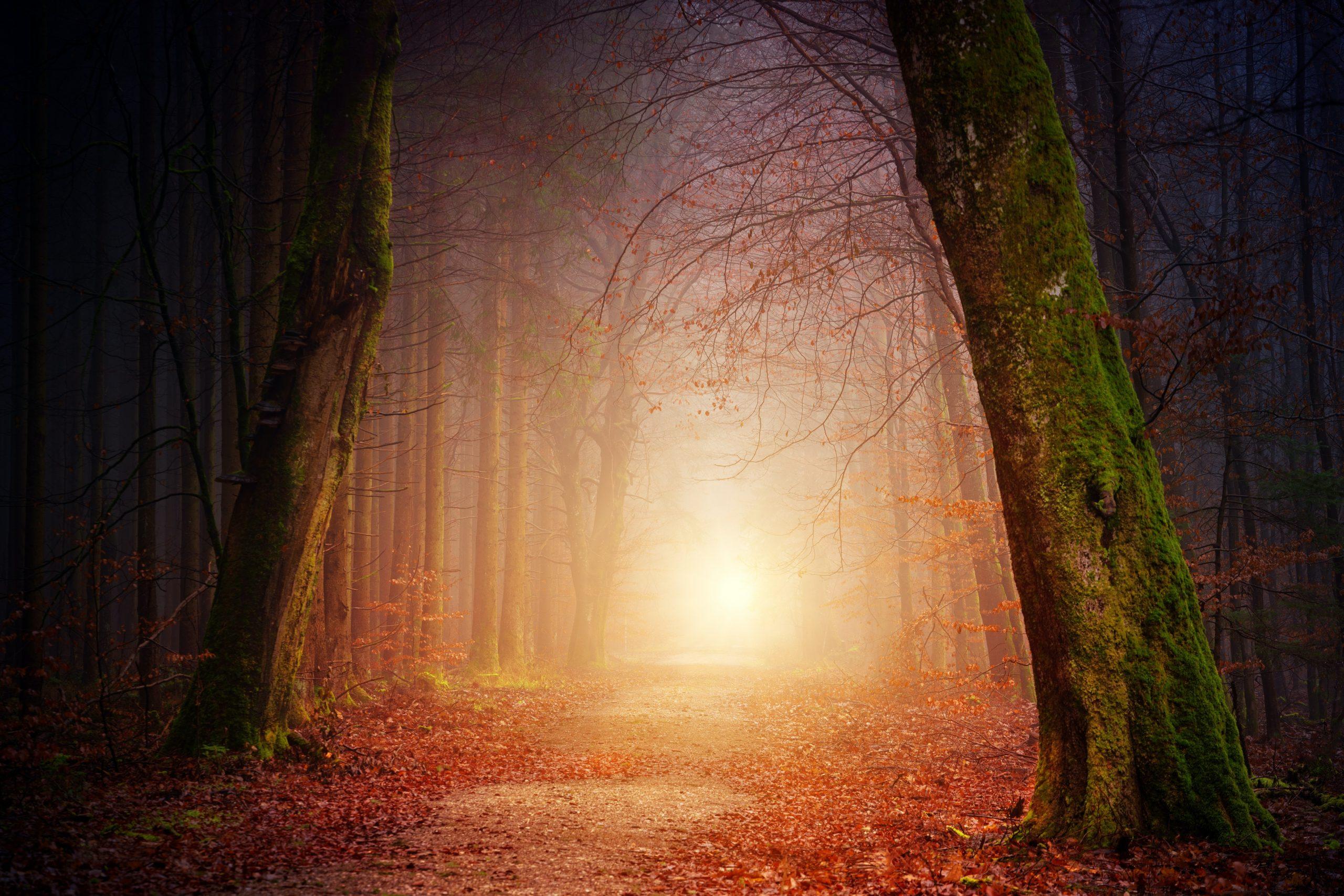 johannes-plenio-1vzLW-ihJaM-unsplash luce nel bosco